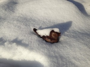 14056_tweet_in_snow
