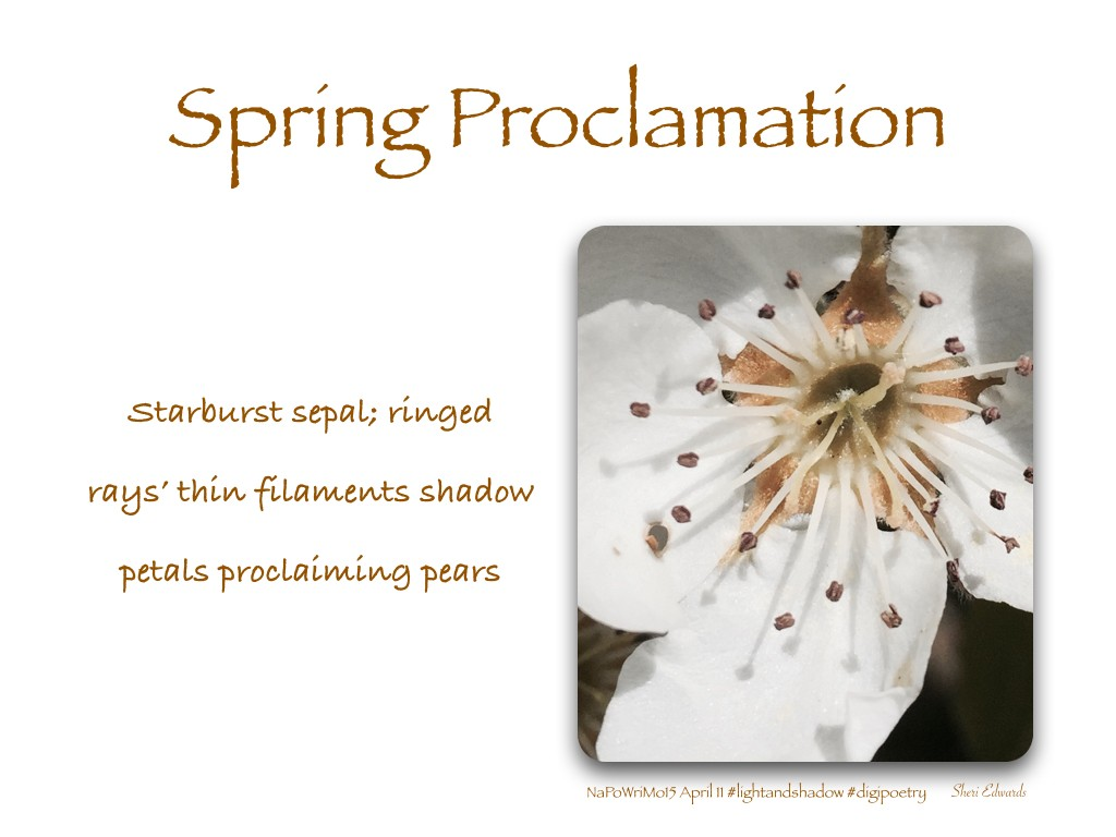 napwrimo15_april11_spring_pears.001
