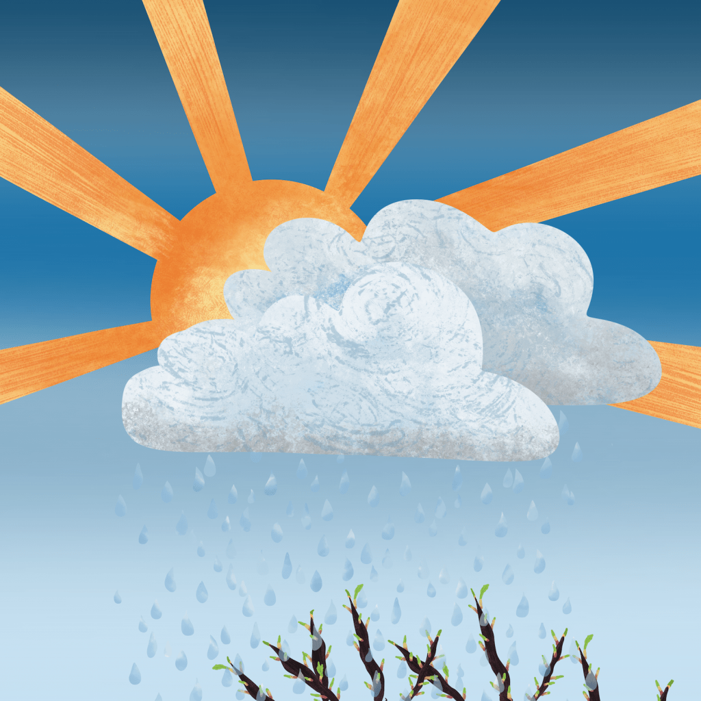 sun, clouds, top of trees, raindrops